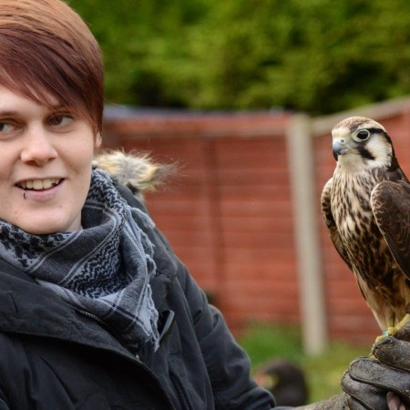 Falconry Wisbech St Mary, Cams, Cambridgeshire